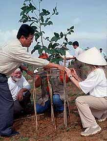 Photo of planting trees in Vietnam